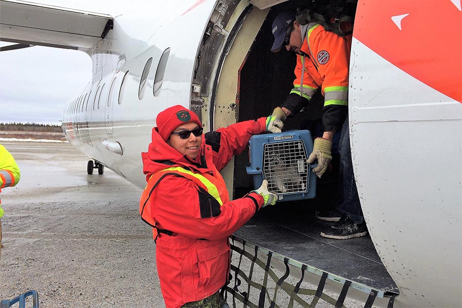 Canadian Ranger Rapheal Sutherland loads a town resident's pet dog on to an evacuation plane at Kashechewan Airport in Kashechewan, Ontario, on April 16th, 2017.