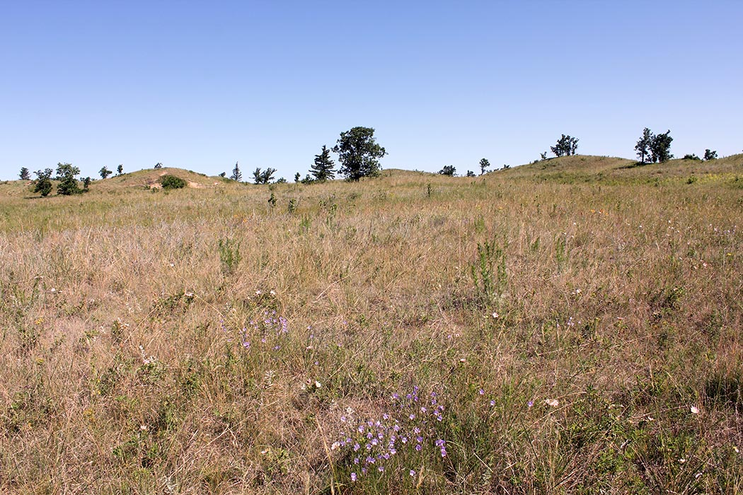 An area of mixed-grass prairie on the Canadian Forces Base Shilo Range and Training Area. It may not sound logical, says Base Biologist Sherry Punak-Murphy, but training taking place there helps the area maintain its natural character. Photo: Sherry Punak-Murphy, Base Biologist. ©2019 DND/MDN Canada.