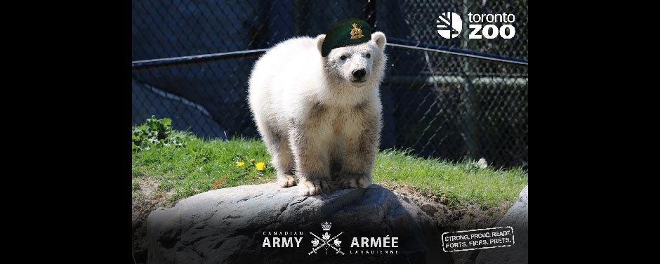 "Slide - Honorary Corporal Juno is the first polar bear to ""bear"" an official rank."